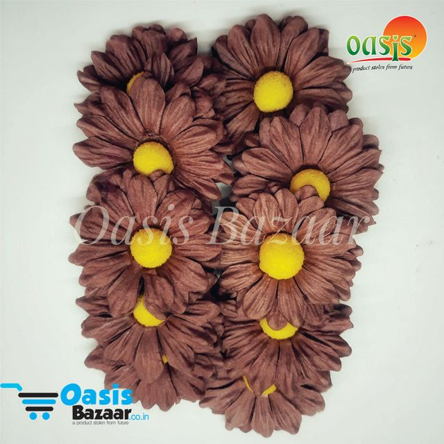 Daisy Sun Flowers Brown in Color.