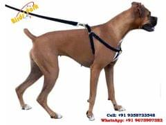 Dog Body Harness adjustable for Medium size breed dog Durable for long time  - We ship BY AIR