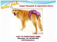 """Dog Diapper Large/Medium Reusable Adjustable with velcro and 6 diposal pad - 2 pcs set  - We ship BY-AIR """"Female Dog Menstruation Underwear Sanitary Reusable Diapers"""" Export Quality"""