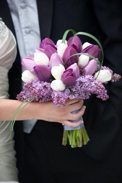 Tulip Purple