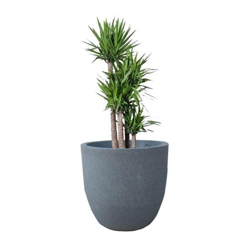 YUCCABE FOXB Pcup Grey 17 Inches Planter