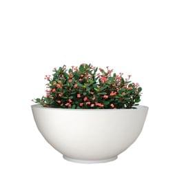Yuccabe Fox B Ktr 18 Inches White Bowl Planter