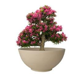 Yuccabe Fox B Ktr 18 Inches Beige Bowl Planter