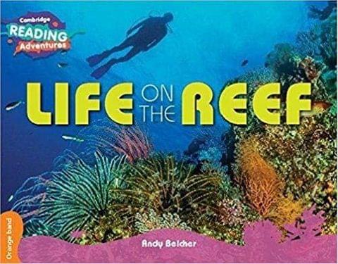 Orange Life on the Reef