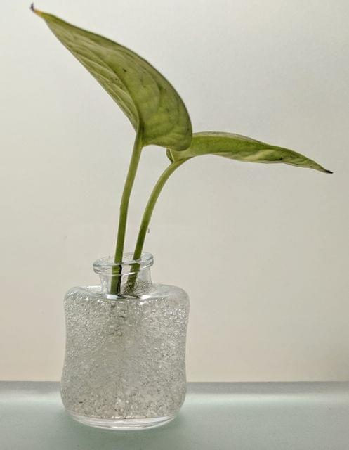 Wonky Bottle Planter with Gel and Plant