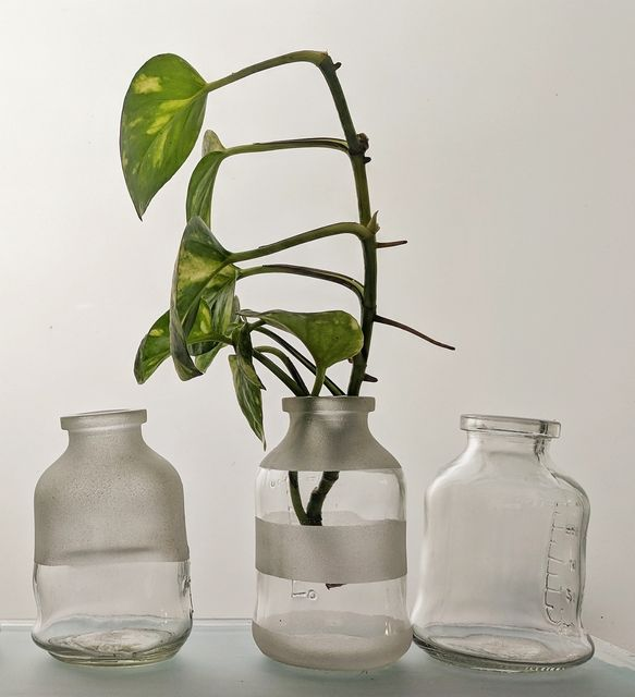 Handy Bottle Planter 100ml