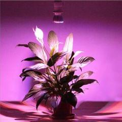 E27 8/10W Full Spectrum LED Grow Light Bulb for Indoor Plant Grow 10W 28 LED