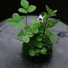 Creative Moss Ball Flower Pot Planter Bonsai Plant Holder Home Garden 12cm