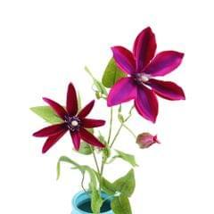 Artificial Trident Lotus Flower Simulation Silk Floral
