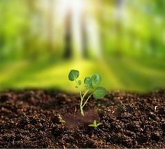 Plantable Seed Ganesha